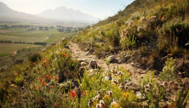La Motte wine estate hiking route