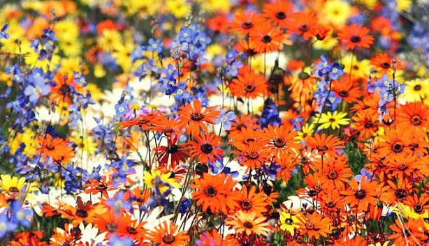 Darling Wildflower Show West Coast