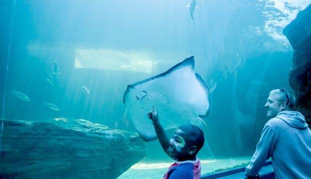 Vista Parties Aquarium Ray