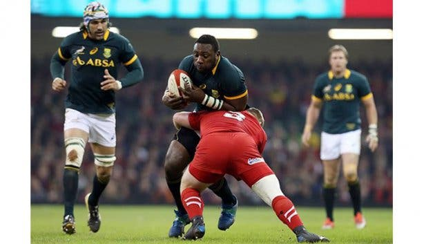 Springboks Rugby World Cup 1