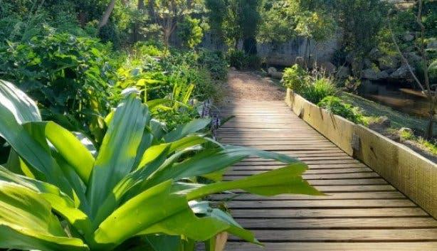 Upper Liesbeek River Garden Newlands Cape Town walkway