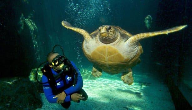 2 oceans aquarium D-turtle