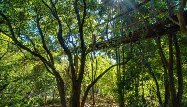 Kirstenbosch Treetop Walkway