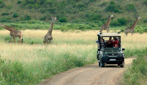 safari kruger park zuid-afrika