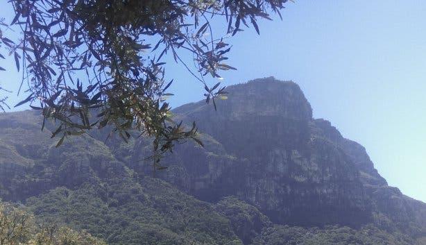 Kapstadt Kirstenbosch Skeleton Gorge Wandern Tafelberg