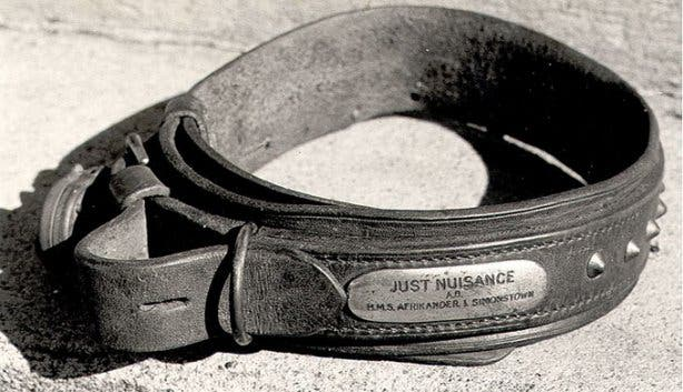 Just Nuisance Collar