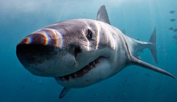 WSDC Shark 4