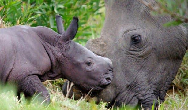 Rhino Run 4