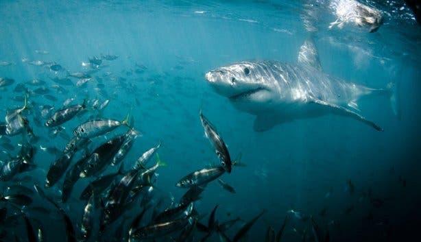 WSDC Shark 6