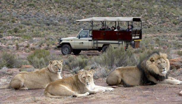 Aquila safari near cape town