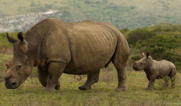 Rhino Run 3