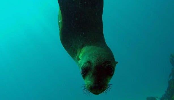 ocean_experiences_2019_seal