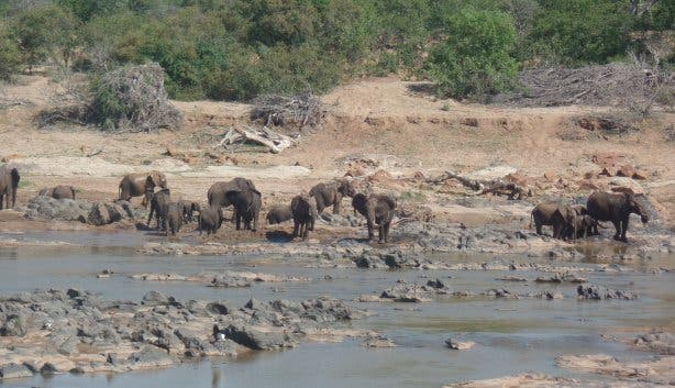 elefantenherde im Krüger Park