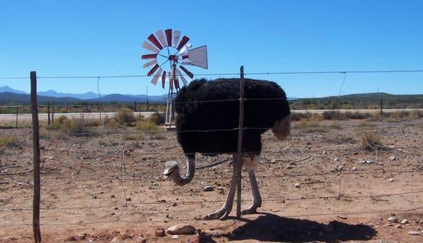 ostrich farm oudtshoorn garden route
