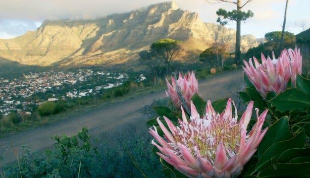 Madiba - proteas