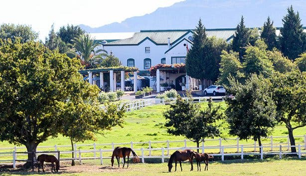 Avontuur Wine Estate building and horses