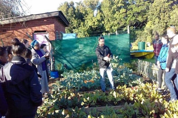 Food gardening course 3