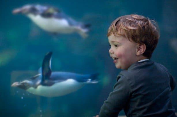 2 oceans aquarium boy and penguin
