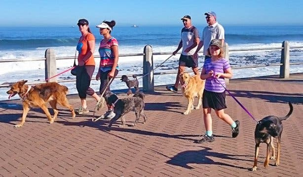 Paws on the Promenade walk