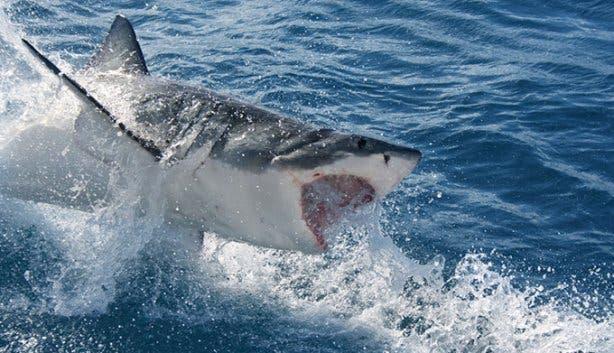 WSDC Shark Jumping 2