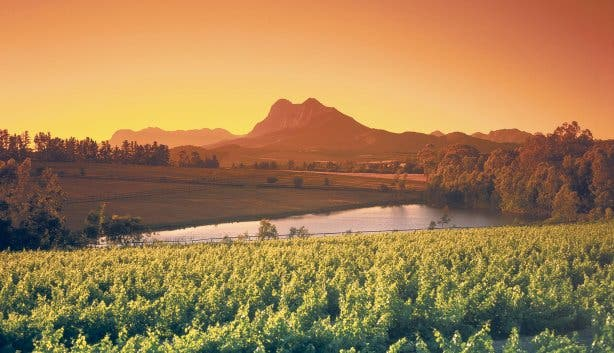 Madiba - sunset winelands