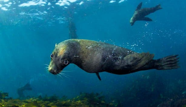 Into The Blue Seal
