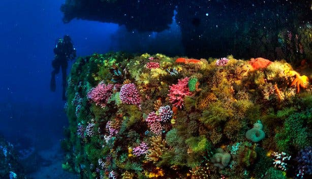 Into The Blue Reef