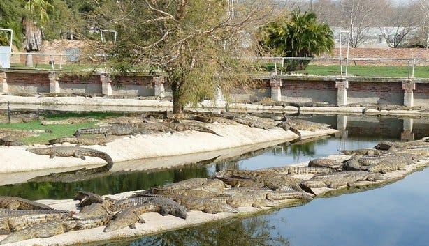 Le Bonheur Crocodile Farm Krokodile