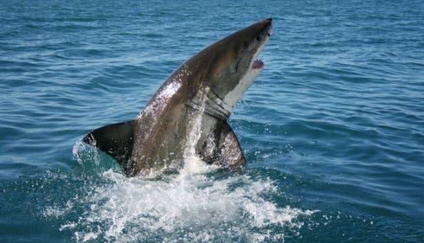 shark_win
