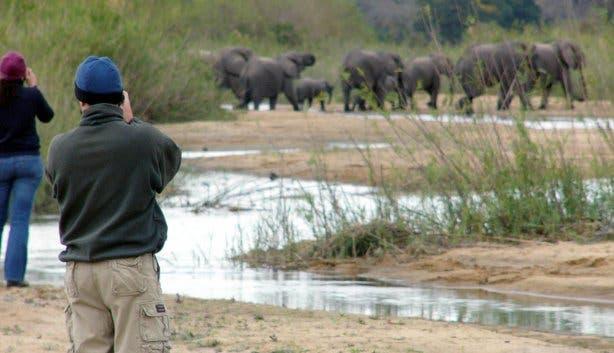 rondreizen safari zuidafrika