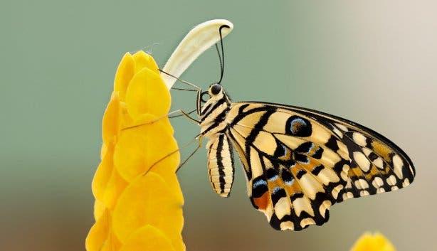 butterfly world zoo