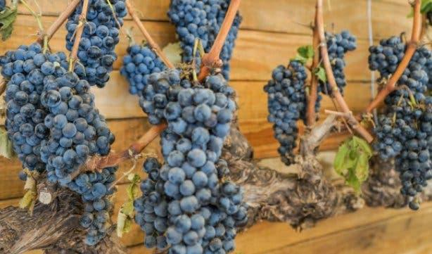 Stellenbosch Wine Festival 23 - 25 Feb 2018 - 2