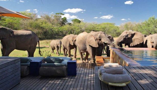 Phinda Homestead Lodge Safari Zuid Afrika