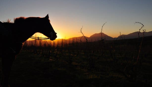 Horse About Trails in Cape Winelands