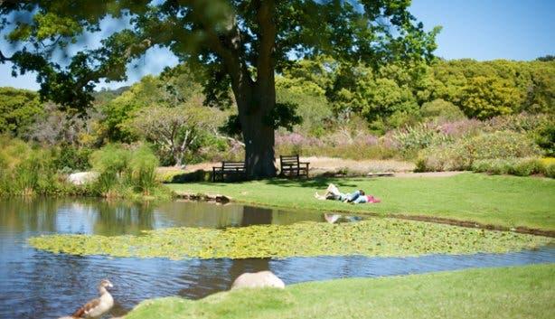 Kirstenbosch Hi Tec 8