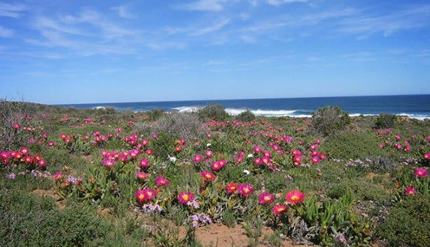 Namaqua West Coast Heritage Weekend 5