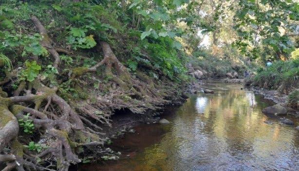 Upper Liesbeek River Garden Newlands Cape Town river