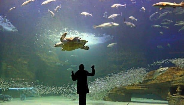 2 oceans aquarium i&j ocean exhibit