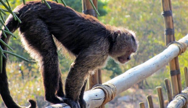 Xplore Tours CT Monkeyland