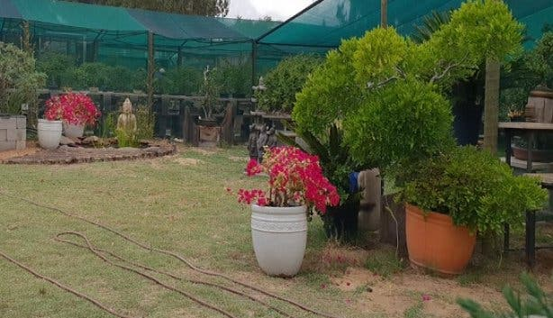 bonsai_plant