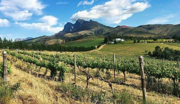 marianne wine estate view