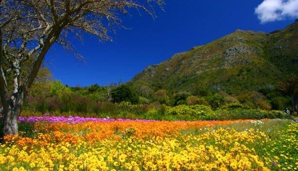 Flowers Mountain