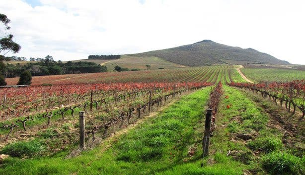 Warwick wine estate winelands