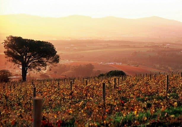Stellenbosch Wine Festival Scenic