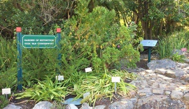 Kirstenbosch - 6