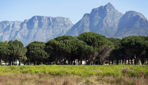 Rondebosch Common by Joshua Oates