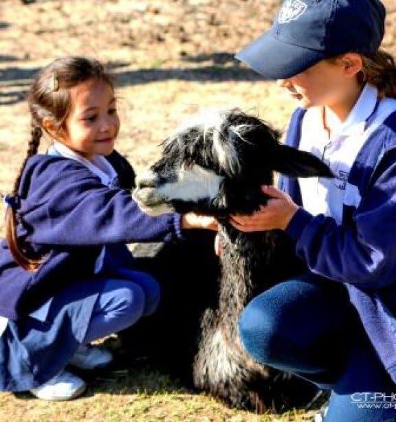 Alpaka Tour für Kinder