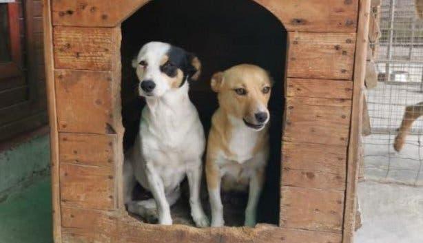 downward_facing_adopt_a_dog