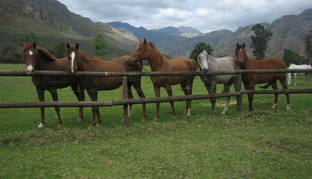 Paradise Stables in Franschhoek