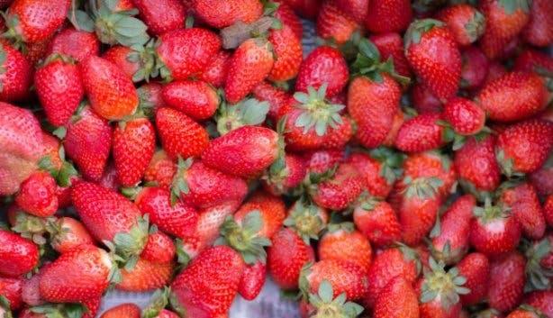 Redberry Farm 2